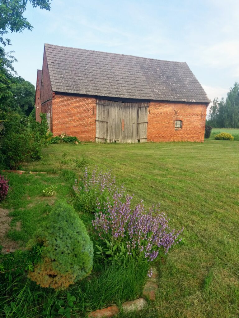 A picture of a red brick barn in the background with grass and sage flowers in the foreground