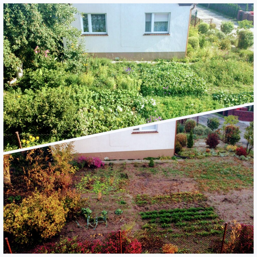 A side-by-side comparison of a village garden in summer and in autumn